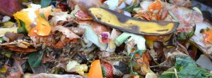 fruit and vegetable waste for composting